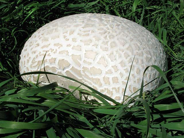 Giant Mushroom Lake City, CO
