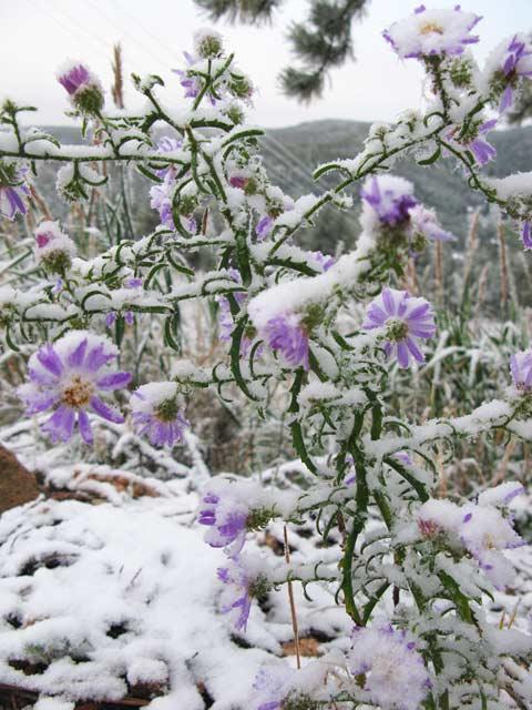 Crystal Lakes Wildflowers in Snow