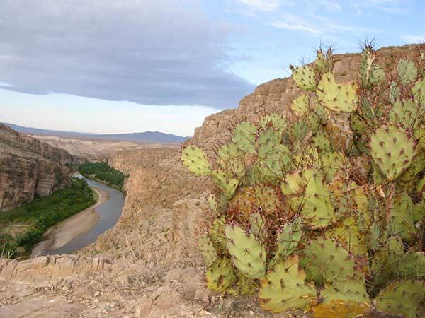 Big Bend Rio Grande Overlook Cacti