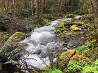 Westfir Oregon Forest Stream