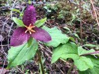 Westfir Oregon Forest Wildflowers