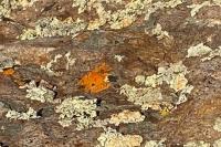 Station Eleven Rock Lichens