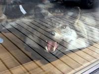 Skagway Alaska Fur Trader Wolf Skin