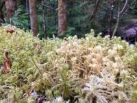 Westfir Trail Run Willamette Forest Ferns