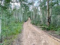 Vickers Ranch Aspens