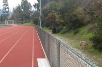 Rio Hondo Track Coyote, Whittier CA