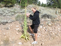 Neal predict snow height at Skunk Cactus Seed Level