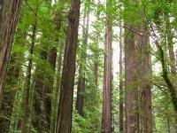 Redwood State Parks California North Coast