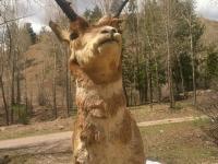 Antelope Head Workamper Ponders Life on the Ranch