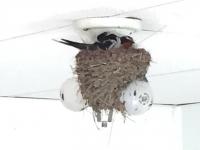 Burwash Landing Resort Abandoned Room Light Bulb Nest