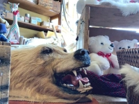 Skagway Alaska Bear for Sale