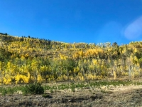 Fall Colorado Aspens near Leadville