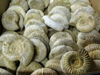 Mt. Ida Arkansas Wegman Crystal Mine Fossils