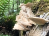 Westfir Oregon Forest Mushrooms