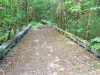 Westfir Trail Run Willamette Forest