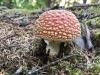 Wild Mushroom, Hyder Alaska