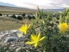 Ruby Creek Montana Wildflowers