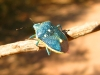 Colorful Beetle in Capitol Reef National Park