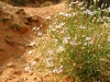 Spring Flowers Bloom in Capitol Reef National Park