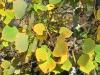 Crystal Lakes Colorado Aspen Fall Colors