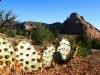 Dewey Utah Wild Cactus
