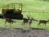 Deer Visit Our Ranch Workamping RV Site