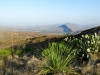 Black Gap WMA Texas Spring Cacti
