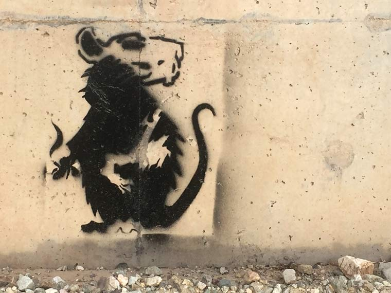 Banksy Style Rat Graffiti
