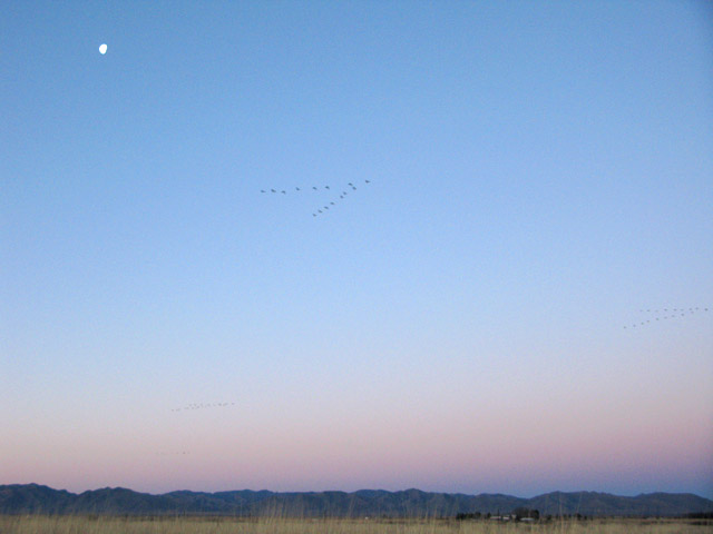 Cranes in Flight over Arizona Sunrise