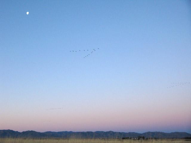 Cranes in Flight over Arizona Sunrise