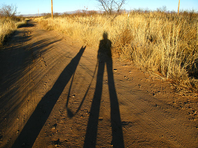Elfrida Desert Sunrise Shadow Dog