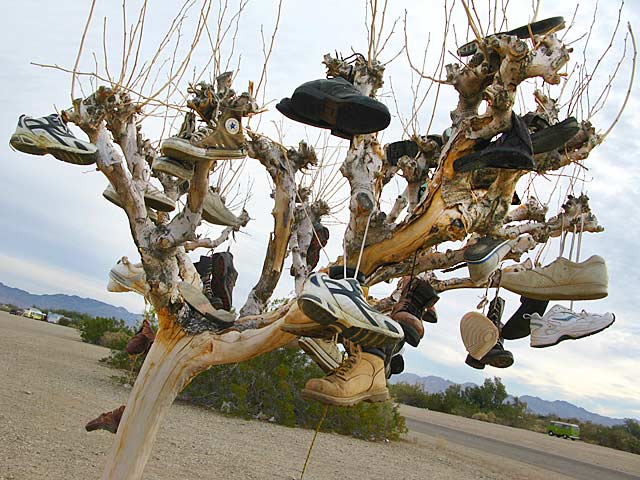 Slab City Shoe Tree