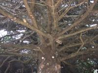 Tree People Copalis Beach WA
