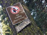 No Tree Cutting Mount Shasta near Weed, CA