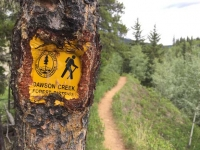 Tumbler Ridge Trail