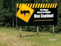 Wildlife Warning Sign on Highway 97, Brittish Columbia