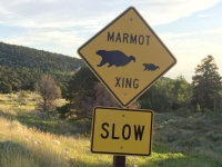 Marmot Crossing Great Basin National Forest