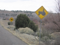 Beware of Tractors and Cows Near Cochiti Lake, NM