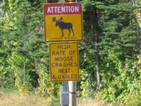 Beware of Moose in Maine!