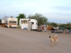 Slab City Dog Barks