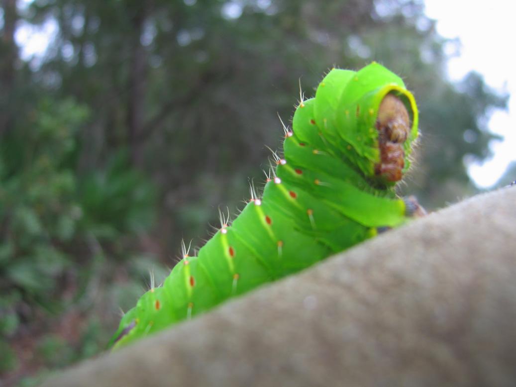 Big Okefenokke Alien Slug Bug
