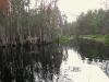 Paddling Okefenokee Swamp, Georgia