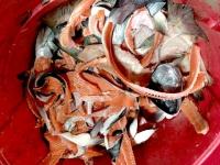 Salmon Waste, Quinalt Pride Seafoods, Taholan WA Fish Market