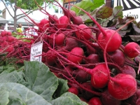 Fresh Beets at Fort Collins Farmers Market