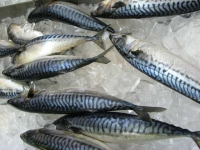 Fresh Mackerel at H Mart Asian Market  Los Angeles