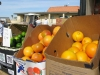 Fountain of Youth Fresh Produce Market