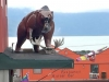 Bear on Roof in Haines Alaska