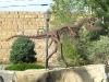 Downtown Thermopolis, WY Dinosaur Art Statue