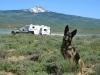 Wyatt watches over home at Miramonte Lake