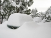 Snow Drift at Jerry's Acres